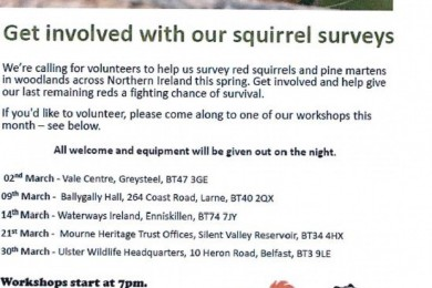 Get involved with squirrel surveys
