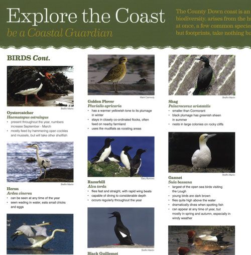 Explore the Coast Birds & Plants Guide - Coastal Guardians