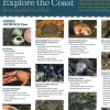 Explore the Coast Shore Animals & Seaweed Guide - Coastal Guardians