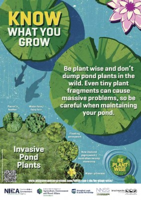 Pond Plants!  - Please think before you dump!