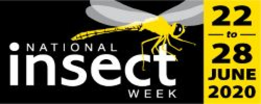 Entomology at Home for National Insect Week