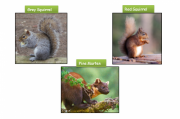 Report Your Squirrel and Pine Marten Sightings here