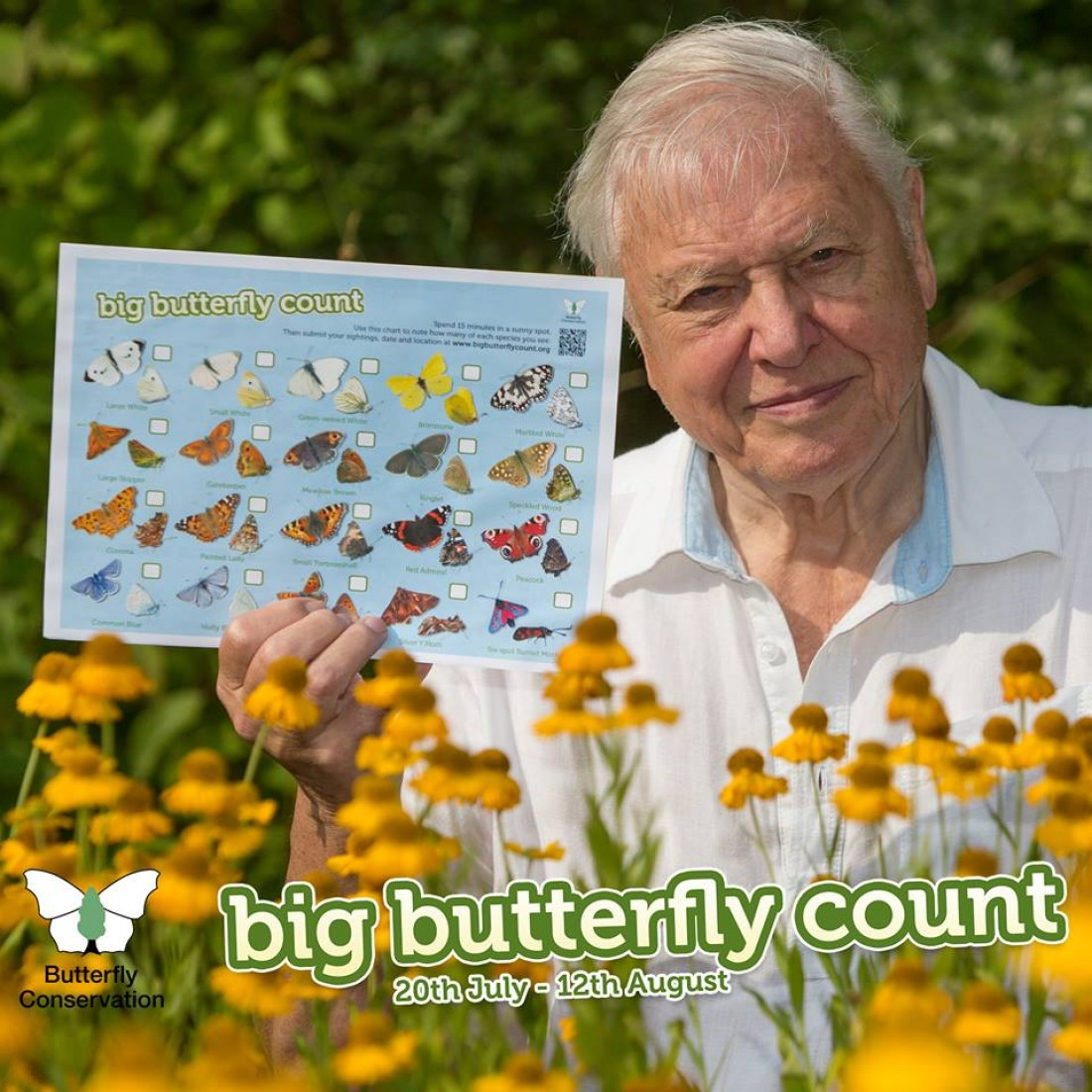 Strangford Lough and Lecale Big Butterfly Count
