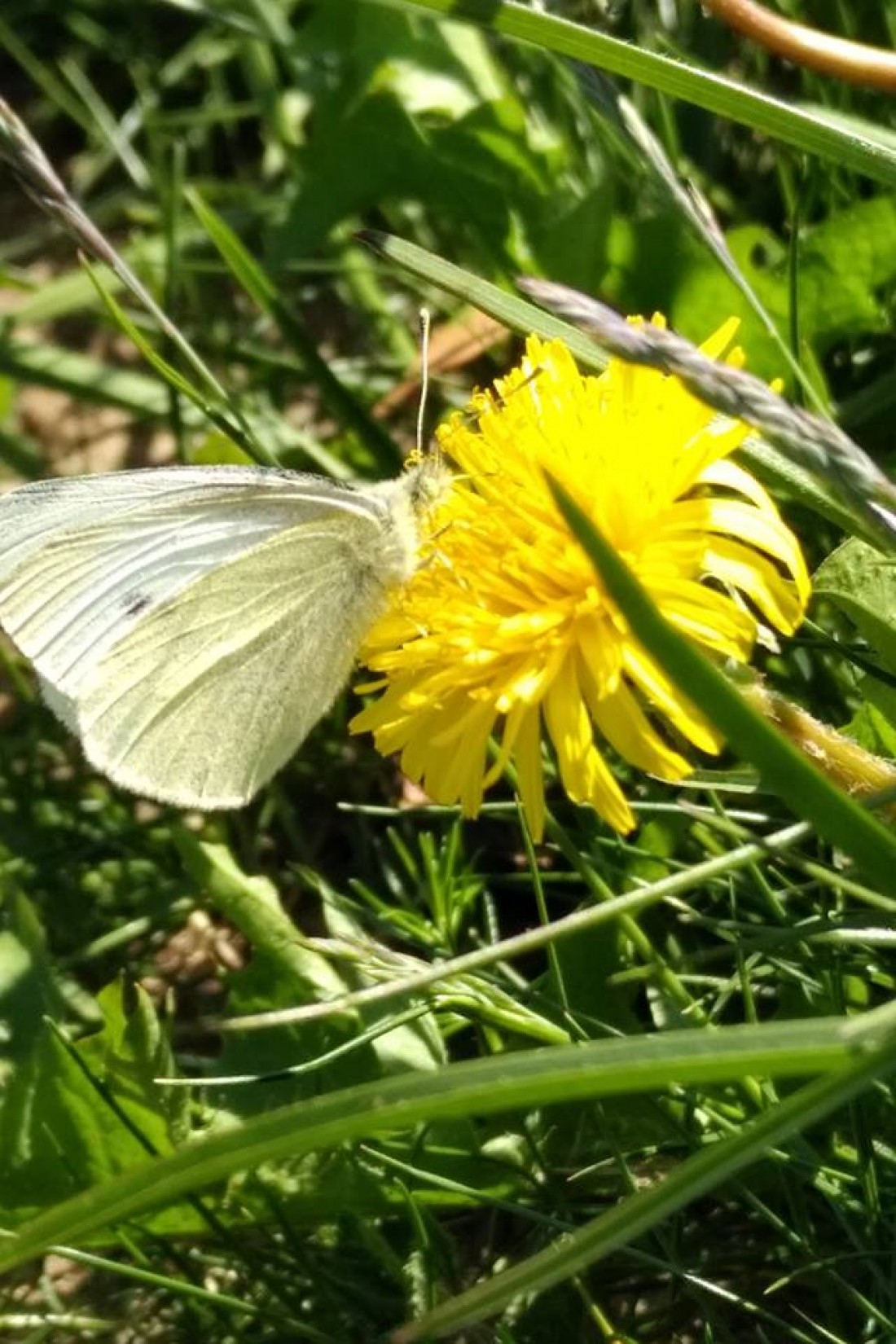 Volunteers Needed For Butterfly Monitoring At Killard Nature Reserve